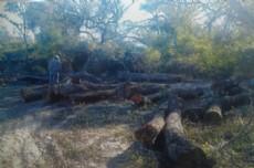 Deforestaci�n y tala de algarrobos en el Interfluvio.